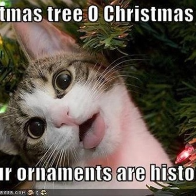 Cats And Christmas Trees Meme