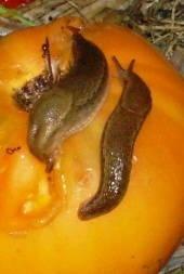 Reader Question: How Do I Get Rid of Slugs?