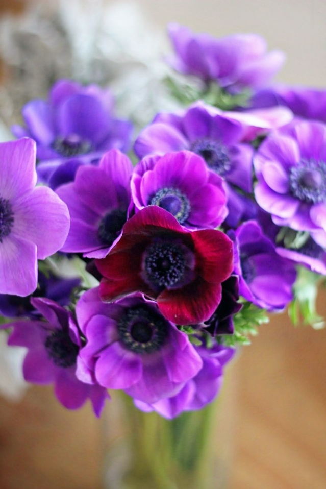 anemones Favorite Flowers & Plants Pinterest