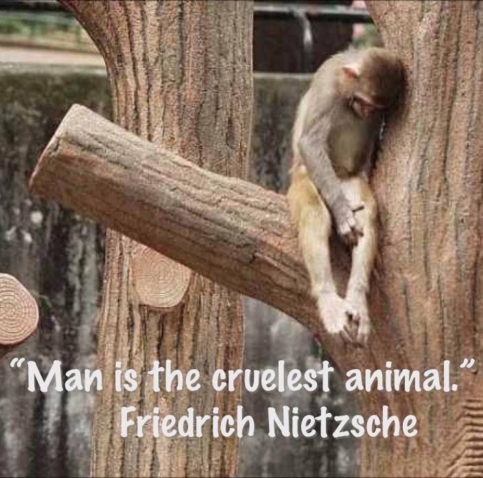 Animal Cruelty Quotes Suffering. QuotesGram