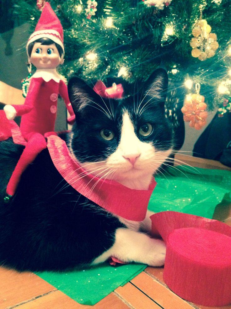 Elf on the Shelf Ideas: Decorating the cat! #Elf #Cats #ChristmasKitty