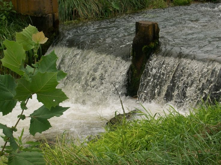 Pin by marilyn k beck on branson 39 s great attractions for Fish hatchery branson mo