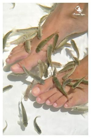Pin by monica schroeder on make up hair and nails for Fish eating dead skin pedicure