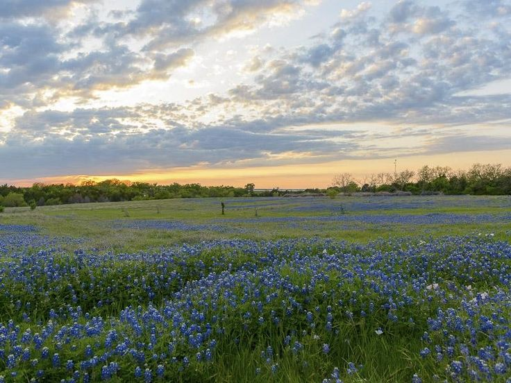 Forney (TX) United States  City pictures : Forney, Texas, United States Farm & Ran | For the Home | Pinterest