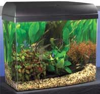 Fish are easy pets Products I Like Pinterest