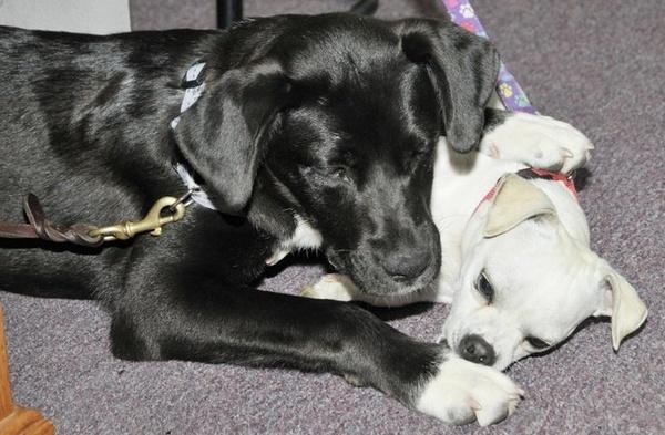 facebook puppies for parole