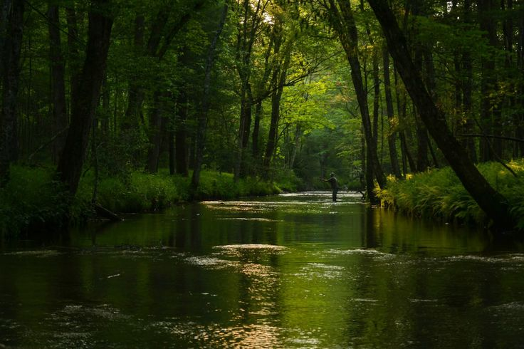 Pin by cabins of the smoky mountains on smoky mountains for Www cabins of the smoky mountains com