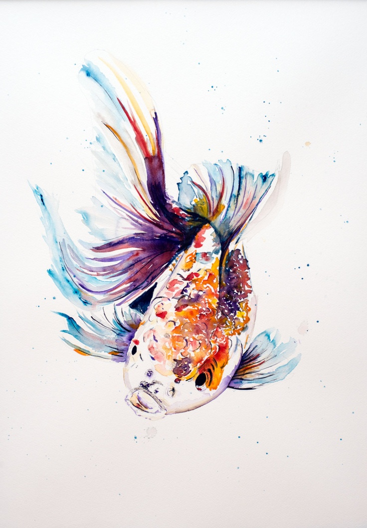 Print of original watercolour and ink koi painting print for Koi fish paintings prints