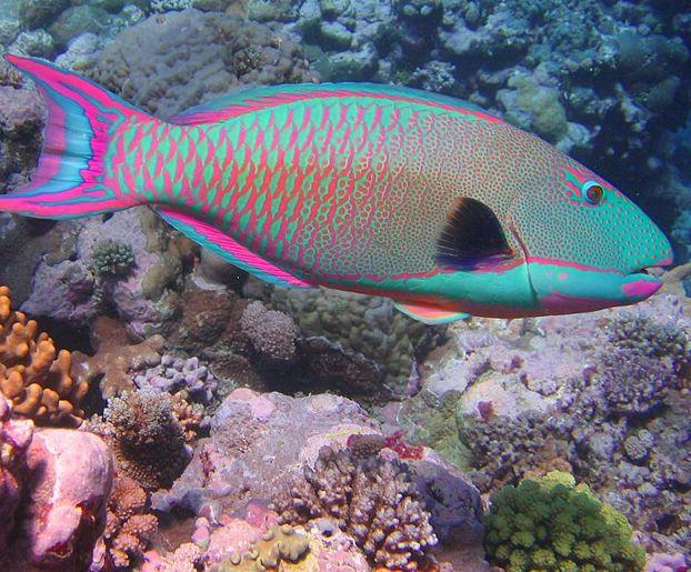 Tropical fish beautiful colors colorful tropical fish for Beautiful tropical fish
