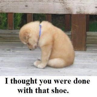 I thought you were done with that shoe.