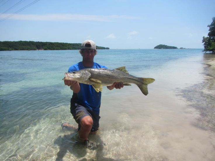 Pin by angling laboratory on florida keys pinterest for Trout fishing in ohio