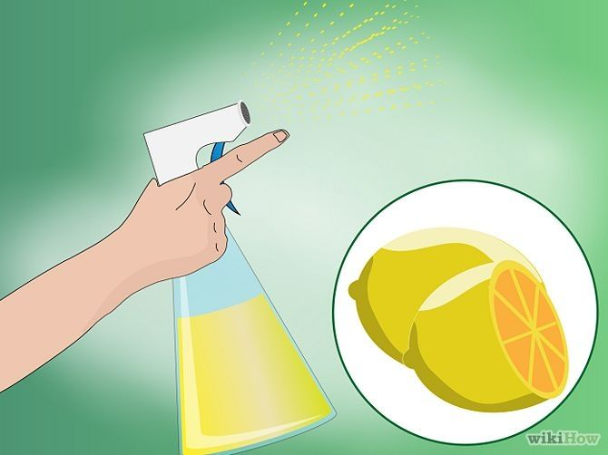 How To Make Homemade Cat Repellent