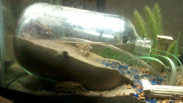 Сделать своими руками гроты в аквариум