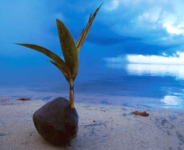 Yap Micronesia  City pictures : Yap ; Micronesia   Micronesia   Pinterest