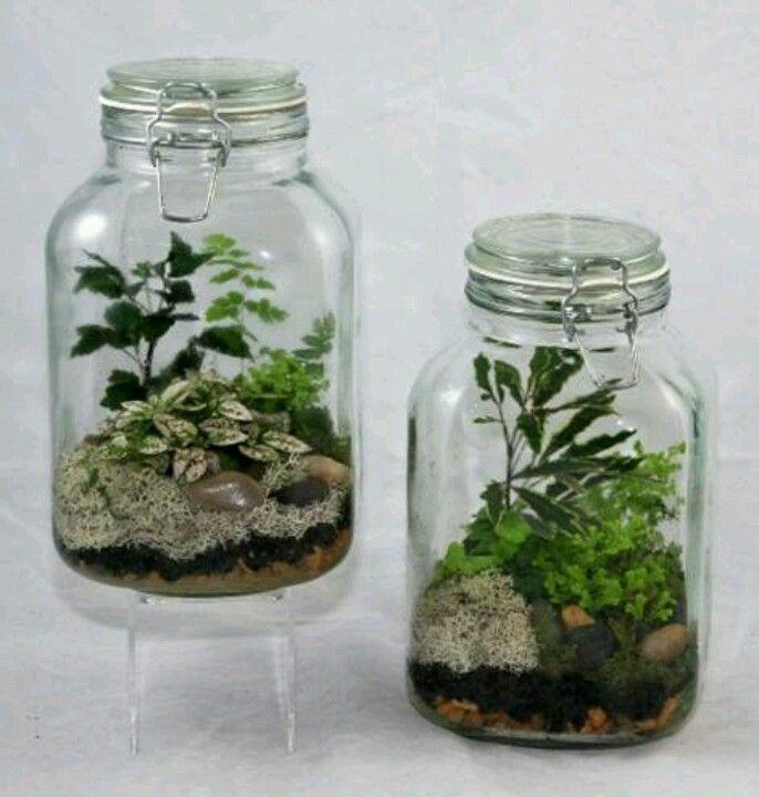 Jar terrarium garden terrarium pinterest for Jardin glass jars