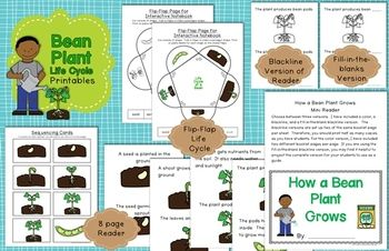 Life cycle of a bean plant printables flip book sequencing cards