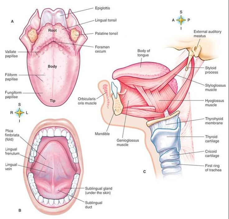 sex therapy anatomy part one