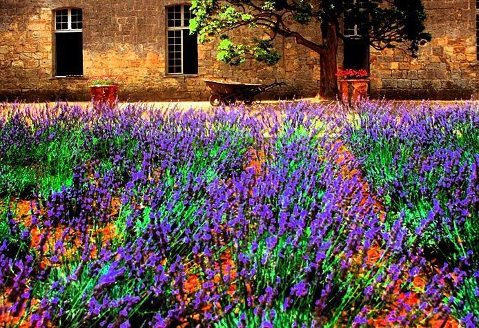 Gypsy Purple home......: Photo