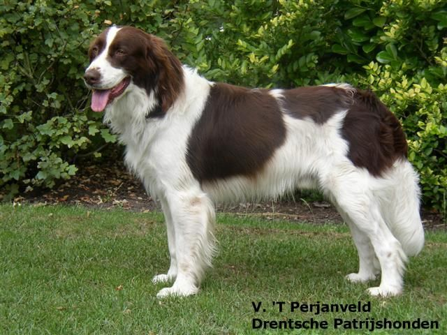 Alphabetical Dog Breeds Pictures