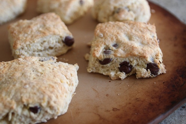 orange_oatmeal_chocolate_scones | DESSERTS is just STRESSED backwards ...