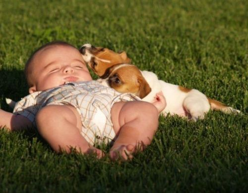 baby + puppies = adorable.