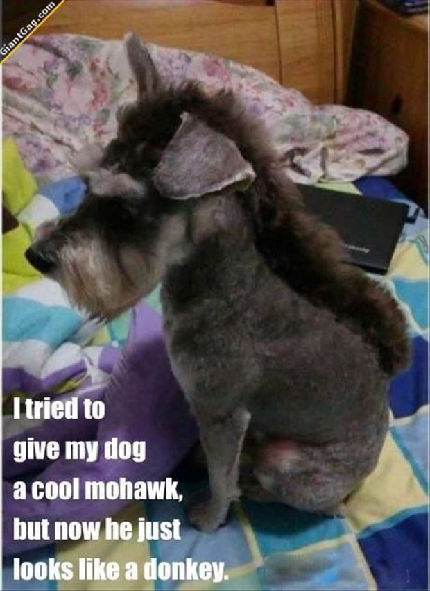 So doing this to Ollie in the near future!!!