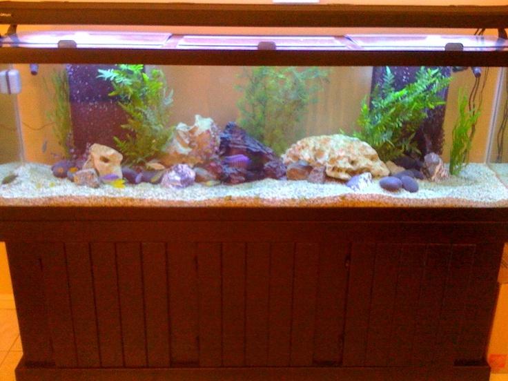 125 gallon freshwater aquarium our fish tanks pinterest for 125 gallon fish tank