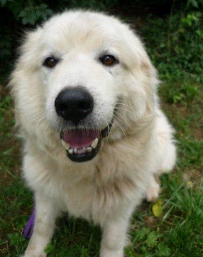 Big Fluffy Dog Rescue Site Petfinder Com
