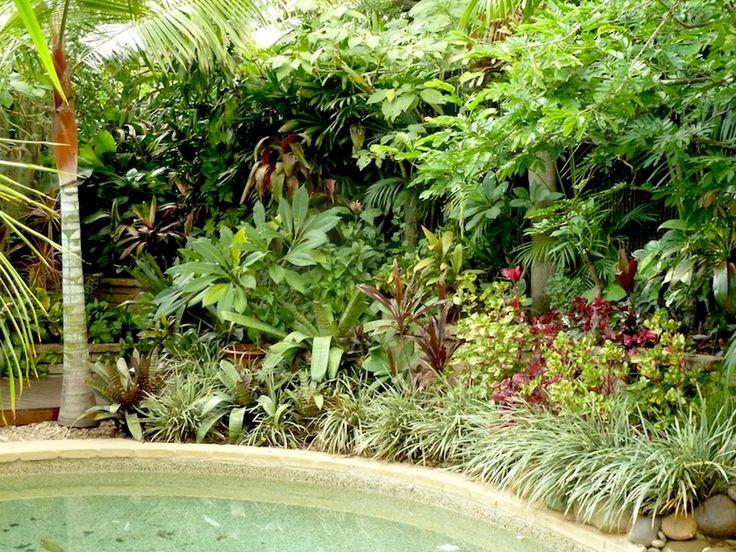 Pin by bushbernie at drytropicsgarden on outstanding for Tropical garden designs australia