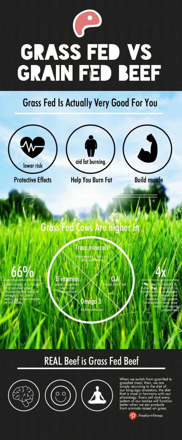 grass fed beef vs grain fed Today, you start making better choices for your family learn the differences  about grass-fed, grain-fed, certified organic and naturally raised beef.