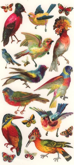 Colorful tropical bird stickers made in the usa