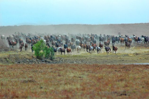 wild horses moving on pioneer woman's ranch