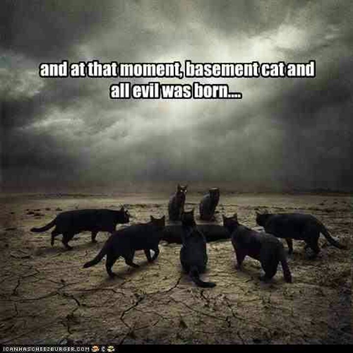 basement cat basement cat pinterest