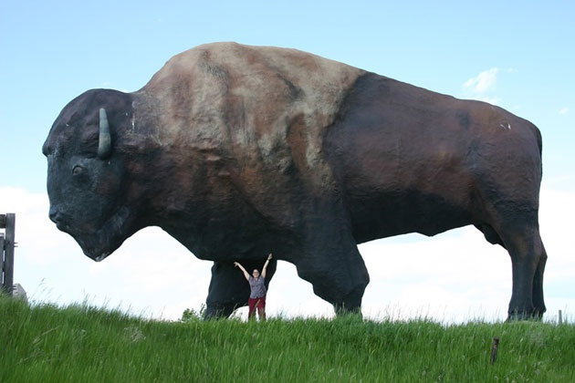My phobias worlds largest buffalo jamestown nd i tried so hard to