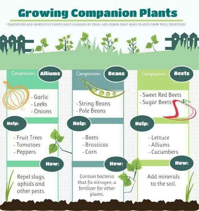 Companion planting gardening and plants pinterest for Vegetable gardening guide