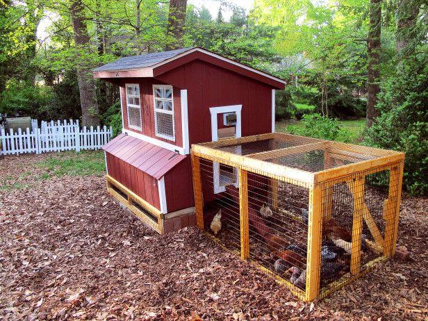 Suburban Backyard Chickens : Suburban Barnyard  Chickens!!!!!  Pinterest