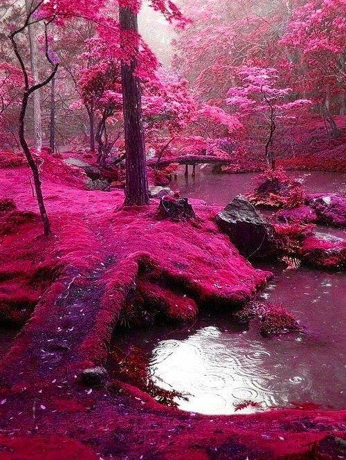 Pink color - Page 5 0e8c0e2324837eccb5a38d1507e39e3b