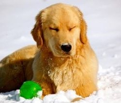 Lushie in the snow: photo by Jill Simmons