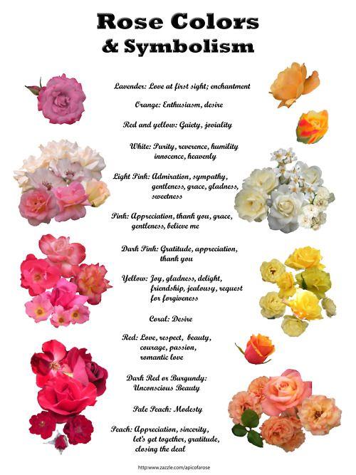 значения цвета роз в подарок двухствольное