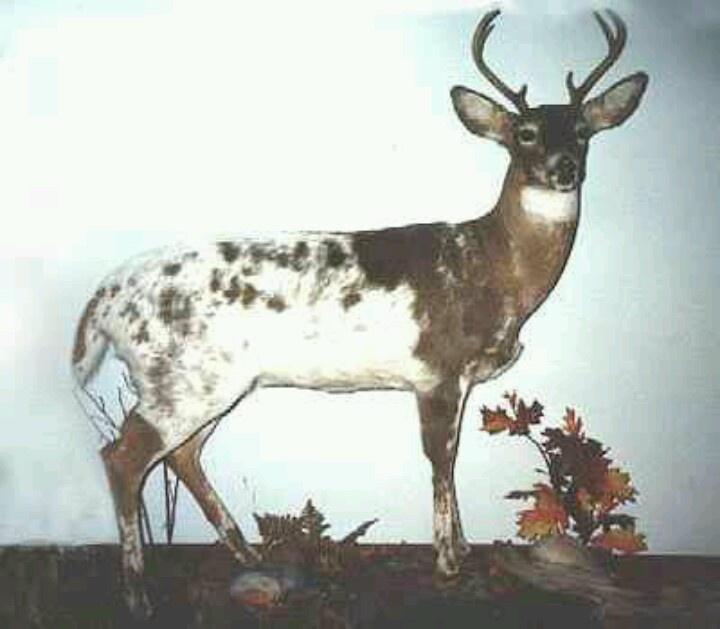 Cool Deer Deer Pinterest