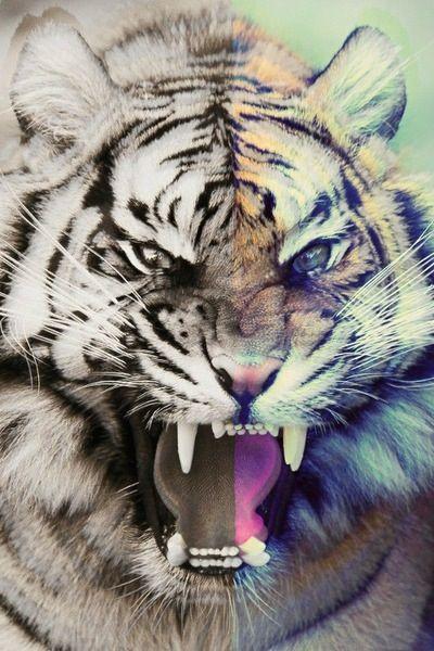 Tiger tumblr hipster wallpaper - photo#12