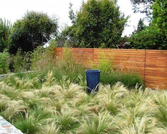 Pinterest discover and save creative ideas for Landscaping ideas with pampas grass