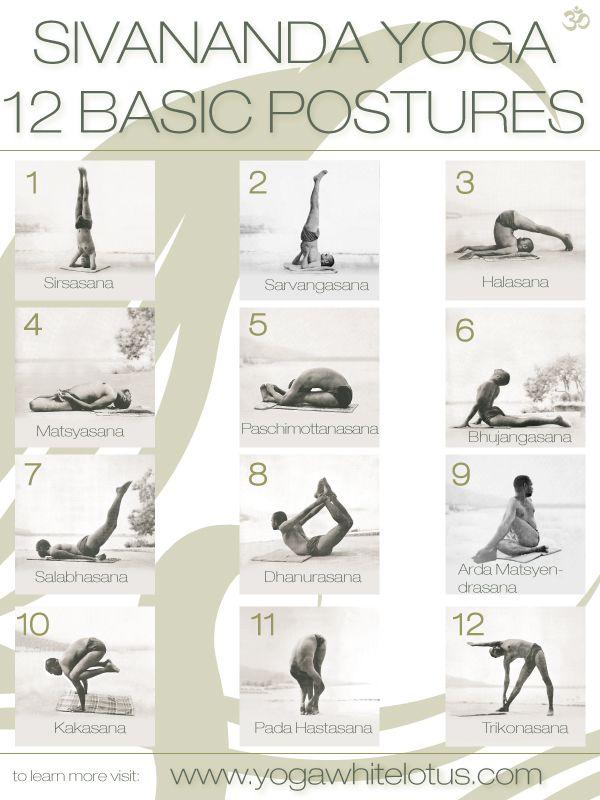 12 basic postures of sivananda yoga yoga pinterest