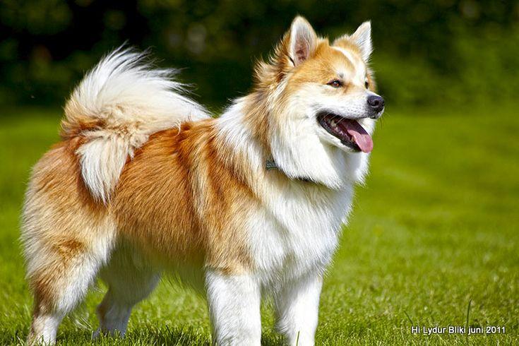 Bichon Frise Dog Breed additionally Dog Mailbox likewise Labrador And ...