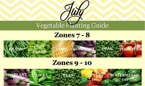 July Vegetable Planting Guide | gardening and farming | Pinterest