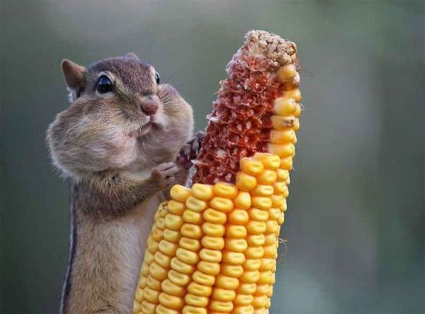 this is what I look like when I eat corn on the cob