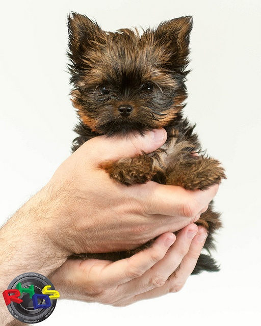 SUKI by Rodney Hickey Design Studio, via Flickr  - Our new addition to the Family