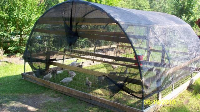 Small Tractor Shelters : Geremy pdf chicken tractor plans for birds
