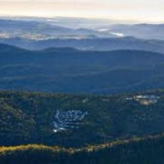 O'rillies rainforest retreat, QLD where dan proposed