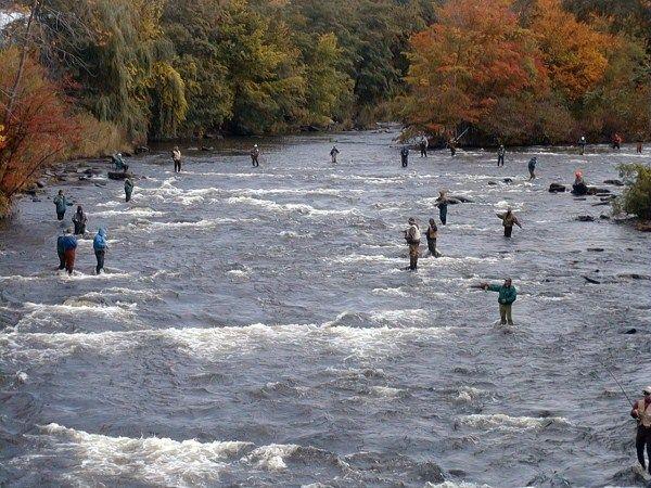 salmon fishing pulaski ny salmon river romance